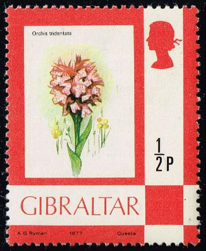 Gibraltar #340 Toothed Orchid; Unused (0.50) (2Stars)  GIB0340-01