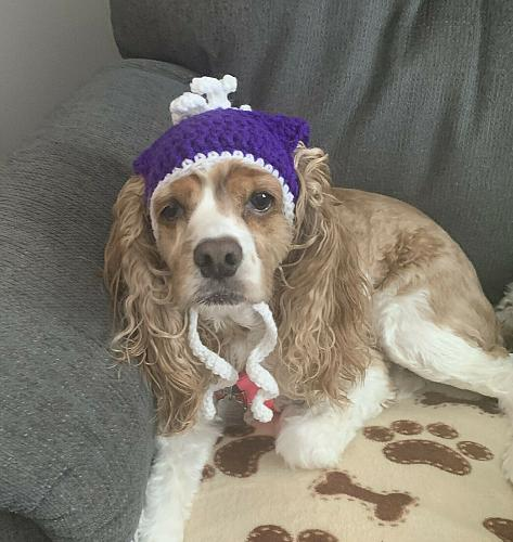 Brand New Crocheted Purple White Dog Hat MEDIUM Dogs For Dog Rescue Charity