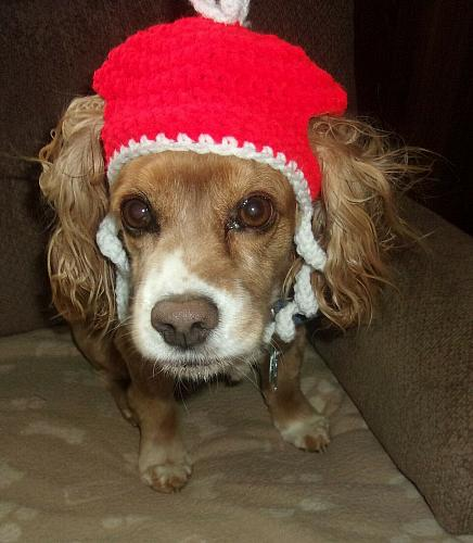 Brand New Crocheted Red White Dog Hat SMALL Dogs For Dog Rescue Charity