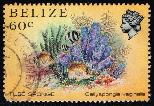 Belize #709 Tube Sponge; Used (2Stars)  BEZ0709-02XVA
