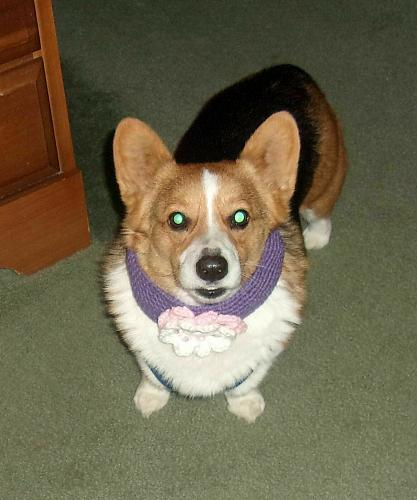 Brand New Crocheted Purple Flower Design Dog Collar LARGE For Dog Rescue Charity