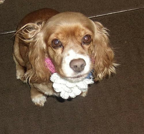Brand New Crocheted Pink and White Flower Design Dog Collar 4 Dog Rescue Charity