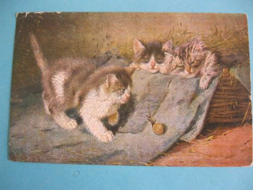 CATS FASCINATED BY A SNAIL 1904 OLD POSTCARD (#278)