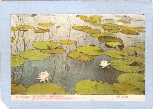 New York Canaan Waterlilies Lake Queechy ny_box3~1198