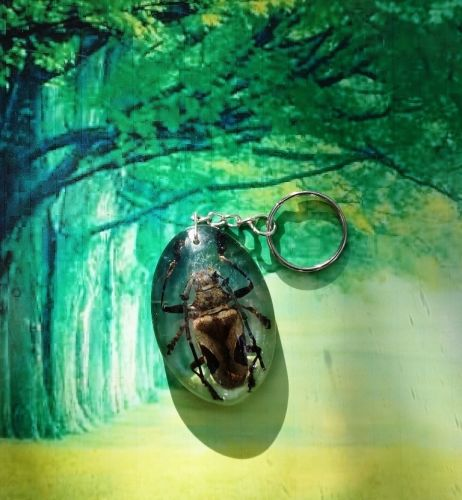 KEY CHAIN INSECT METALLIC WOOD-BORING BEETLE BROWN AND BLACK REAL INSECT IN THAI