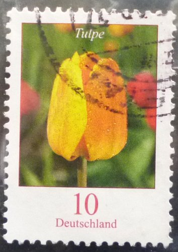 Stamp Germany 2005 Definitive Issue - Flowers Tulip 0.10 Euro