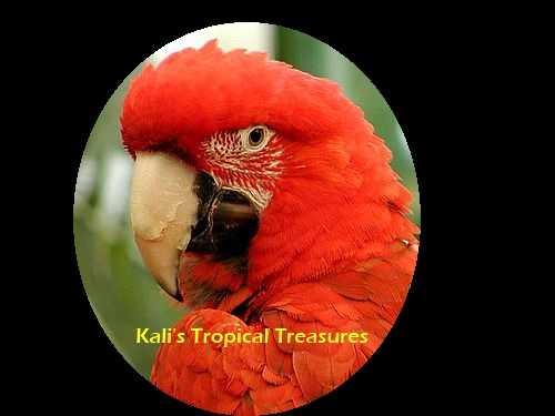 Kali's Tropical Treasures